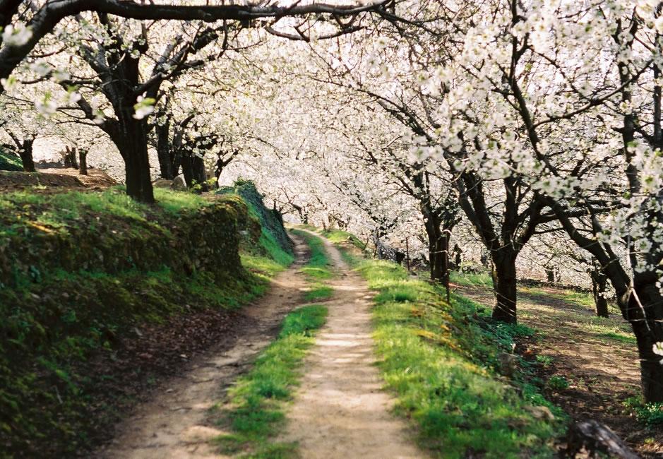 Reproches a los seguros agrarios: Con un seguro eficiente se pudo haber evitado la ridícula campaña de la Cereza