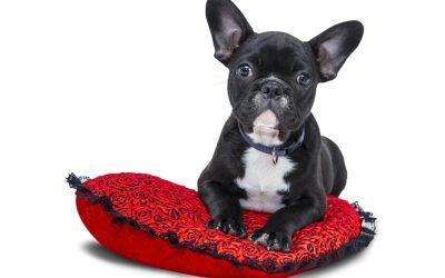 Los seguros de Mascotas son rentabilizados por servicios veterinarios